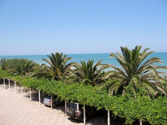 Palm and vine-covered back parking lot of Guido's restaurant, Termoli