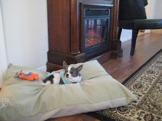 Cypress Creek Cottages: Flip enjoys his VIP amenities