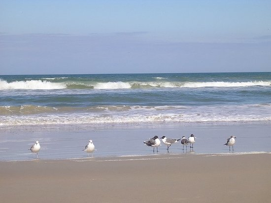 Daytona Beach, Floride : Seagulls trying to stand on one leg in the brisk breezes...