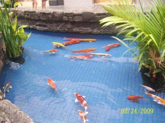 An outdoor pond with some big goldfish i think this is at for Best goldfish for outdoor pond