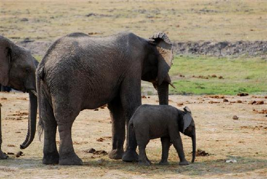Chobe National Park, : Mom and baby