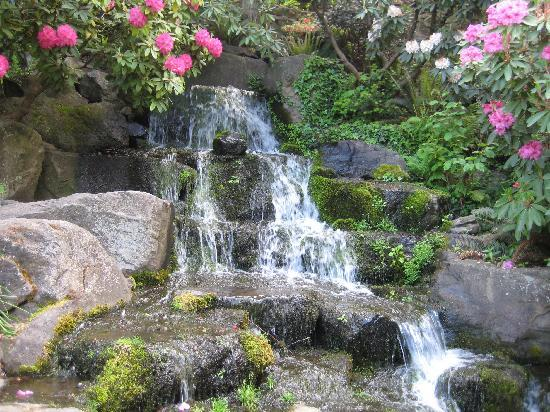 Flower Picture Of Crystal Springs Rhododendron Garden Portland Tripadvisor