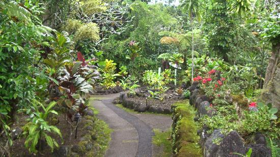 Hilo Tropical Gardens: This is a photo I took of the garden.