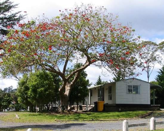 Photo of Twin Pines Tourist Park Paihia