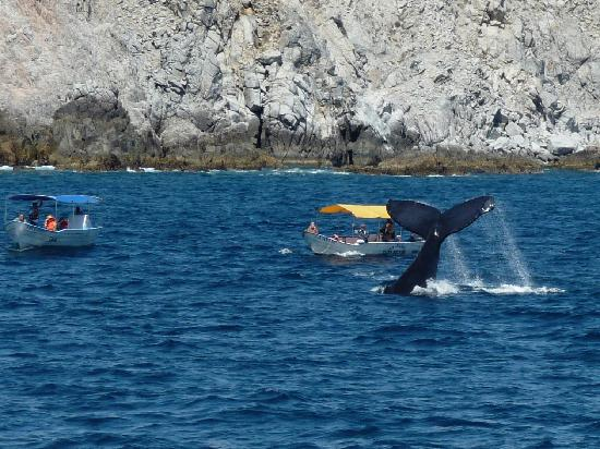 Sheraton Hacienda del Mar Golf & Spa Resort Los Cabos: Whale-watch cruise