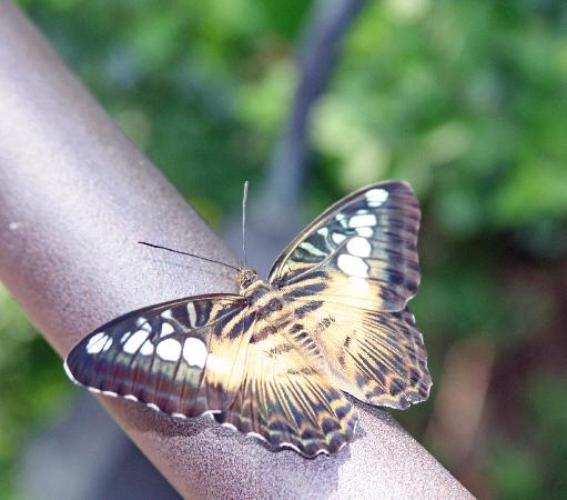 Gainesville, Φλόριντα: butterfly rainforest