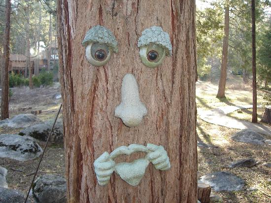 Idyllwild, CA: Friendly Trees
