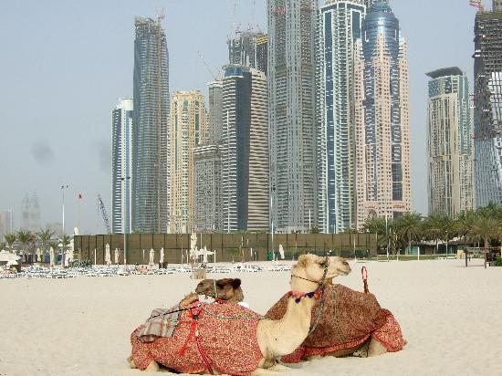 Habtoor Grand Resort & Spa: beach view