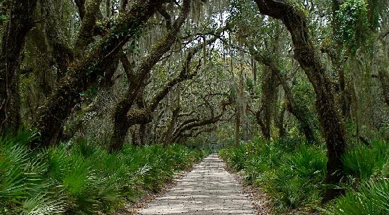Cumberland Island, Gürcistan: Untouched Beauty