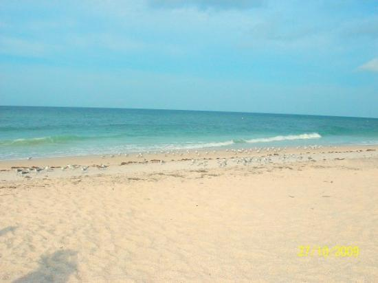 Beach Retreat Casey Key Nokomis Fl