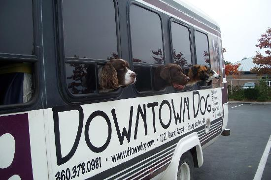 Friday Harbor, WA: Downtown Dog bus