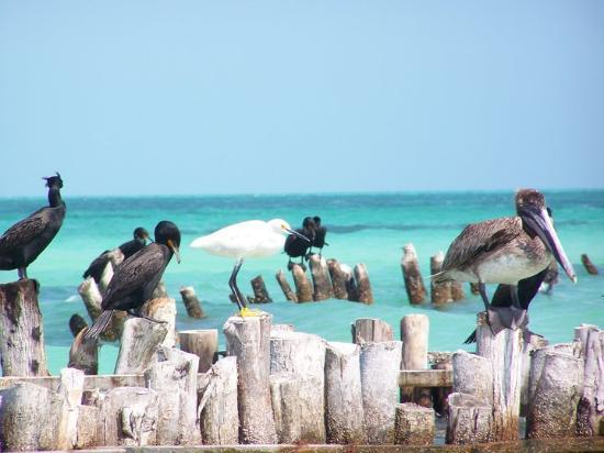 Holbox Island Picture