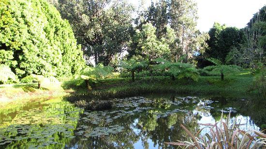 Waianuhea Bed & Breakfast: Ponds at the grounds