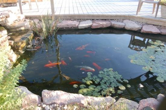 Here Is A Little Fish Pond Next To The Hot Tub Picture