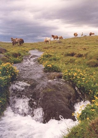 Akureyri, Islande : Icelandic horses on the land of one of the farms we stayed in the north of the country. We rode