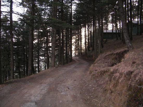 Chail, India: walk in the forest