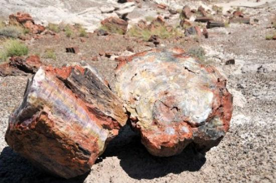 Petrified Forest Nationalpark, AZ: Petrified Forest NP (AZ)