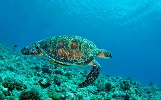 Picture of turtle taken on one of the Fish 'n Fins tours. - Courtesy of media-cdn.tripadvisor.com