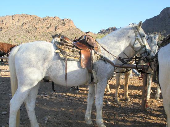 White Stallion Ranch: My lovely horse