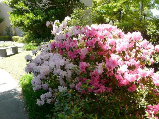 Wilmington, NC: North Carolina Azalea Festival