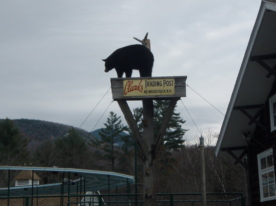 Lincoln, NH: Clarks Bear