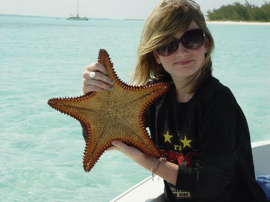 ‪‪Great Exuma‬: Starfish‬