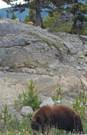 Whitehorse, Canada : Teddy bear in the Yukon