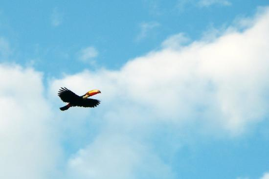 Secret Garden Iguazu B&B: another toucan flyby!