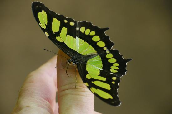 Secret Garden Iguazu B&B: butterflies like the taste of salt on your skin