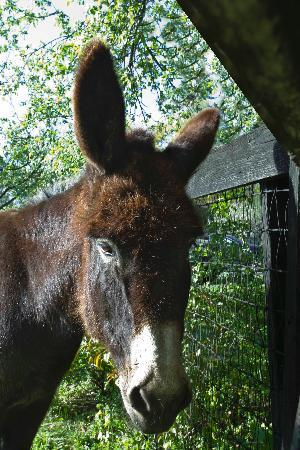 WhistleWood Farm Bed and Breakfast: the donkey