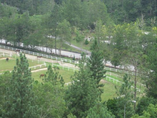 Tanah Tinggi Genting, Malaysia: Ranch at the foothills of Genting Highlands!!!!