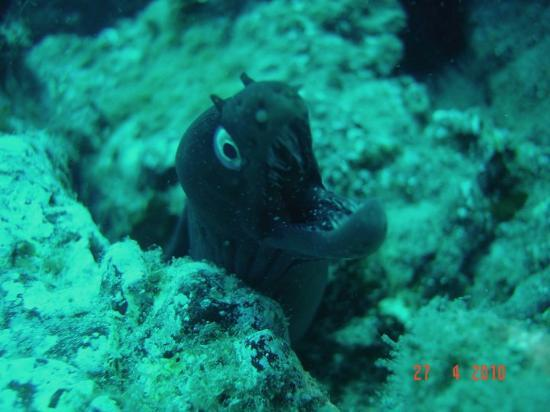 Las Galletas, Spain: MORAY EEL