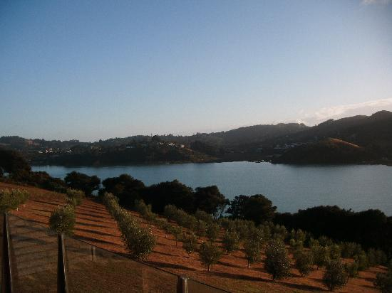 Inlet Villas, Waiheke Is. olive grove