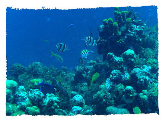 Grand Cayman: Life on the Reef at Turtle Reef dive spot