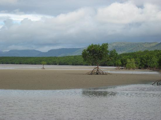 Port Douglas, Australien: The beach - no swimming - crocs!