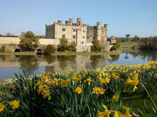 , UK: Castle with daffodils