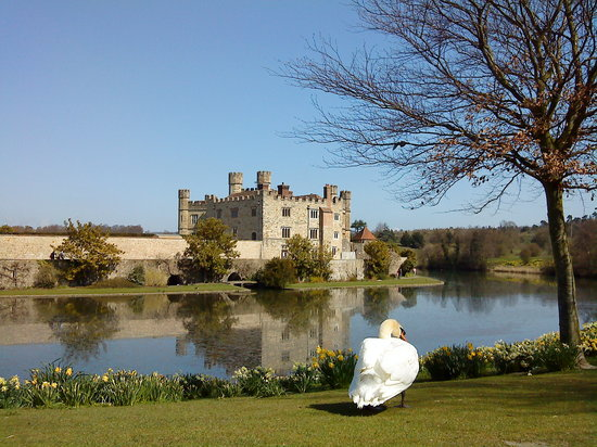 , UK: Castle with swan