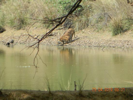 Kanha National Park, Indien: A peek in to my world