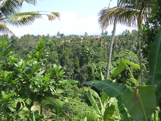 Ubud, Indonesia: Looking across the valley