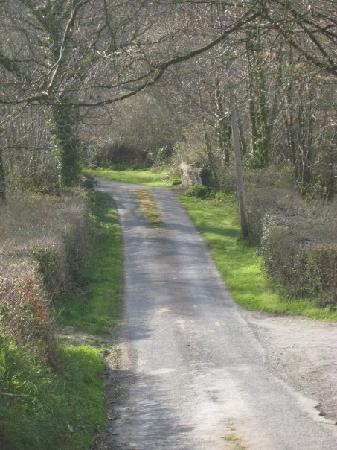 Bideford, UK: Country Lanes