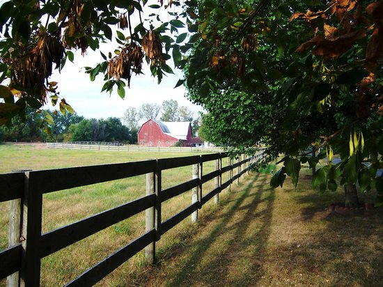 Middlebury, : Barn next to the Inn and the meadow