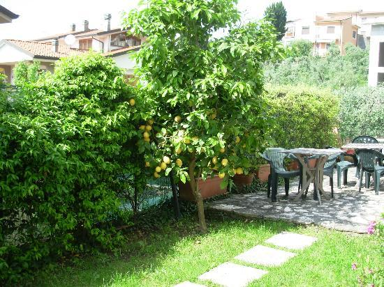 Sunrise Bed & Breakfast: Parte del giardino del B&B