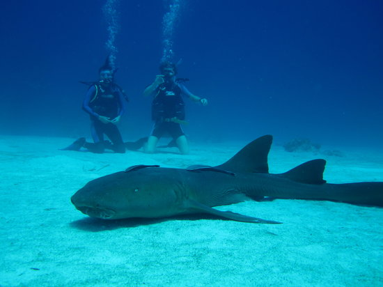 Providenciales: Our first cerified dive!