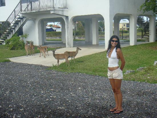 Royal Hawaiian Motel / Botel: Visiting Key Deer, recommended by Nicky and Jeanie