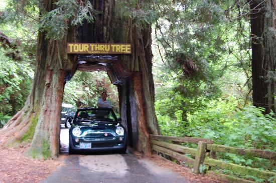 Photos of Tour-Through Tree, Klamath