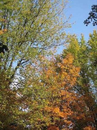 Saco River Camping Area: autumn leaves