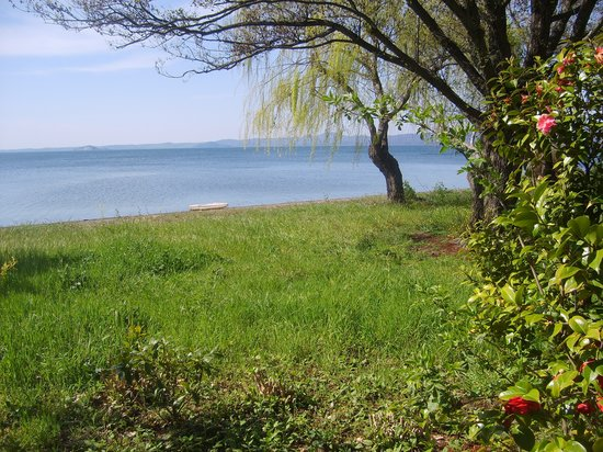 Province of Viterbo, Italy: Nature: water, grass, trees, flowers, wind, beach.