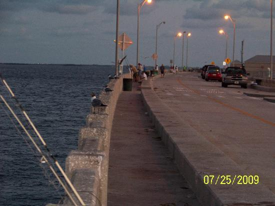 Fishing bridge at sundown open 24 hours a day picture for Skyway fishing report