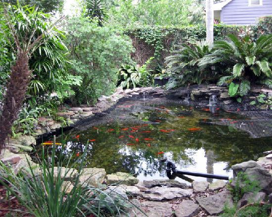 Backyard koi pond picture of lions inn bed breakfast for Cool koi ponds