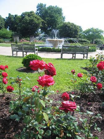 Rose Garden And Fountain At Loose Park Picture Of Loose